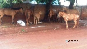 Mais de meia dúzia de equinos estavam na frente da casa
